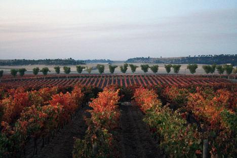 Diez cosas que disfrutar en la Ruta del vino Cigales