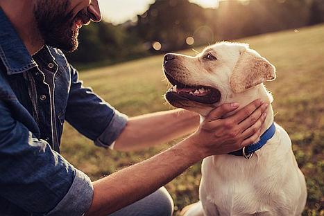 Animales: 6 percances frecuentes con perros