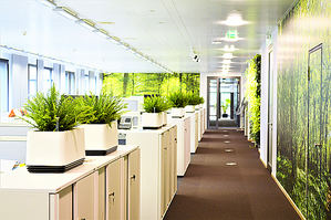 5 consejos para mejorar la productividad y la salud de los empleados en las oficinas