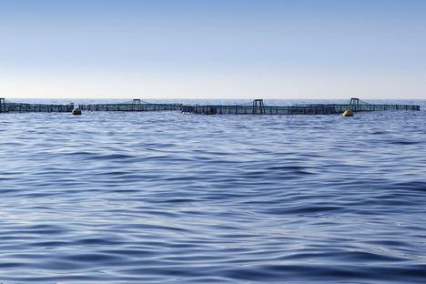La Junta de Andalucía vuelve a convocar en 2021 ayudas a la acuicultura por las pérdidas de la pandemia