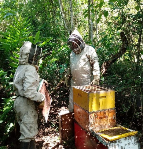 Aristeo Bee Venom desarrolla productos a partir del veneno de las abejas