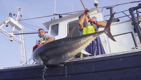 La empresa Atún Rojo del Estrecho S.L. inicia el proceso de evaluación completa bajo el estándar de pesca sostenible MSC para certificar sus capturas de atún rojo