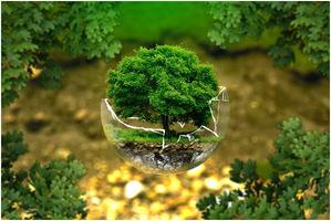 Biomasa, una solución limpia y económica para las necesidades de calefacción