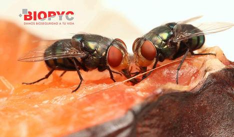 Biopyc recomienda realizar control de insectos voladores en el sector alimentario