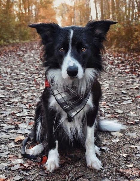 """Nuestros perros y la tecnología para mascotas o """"pet tech"""""""