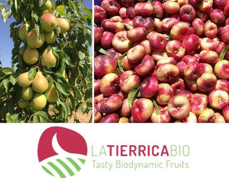 La consultoría CEDEC colabora con FRUTAS GARCÍA VARGAS y su marca de productos ecológicos LA TIERRICA BIO