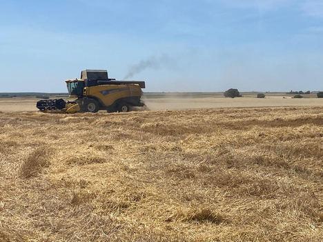 Comienza la recolección de cereales en la provincia de Córdoba afectada por la falta de agua