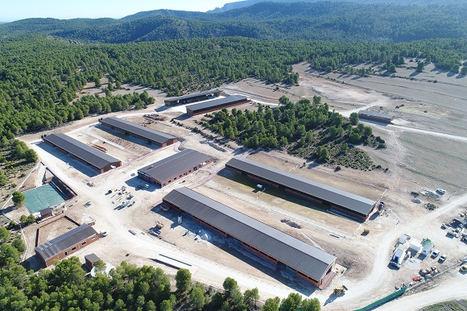 Cantero de Letur invierte 5 millones de euros en su nueva granja ecológica de 3.000 cabras