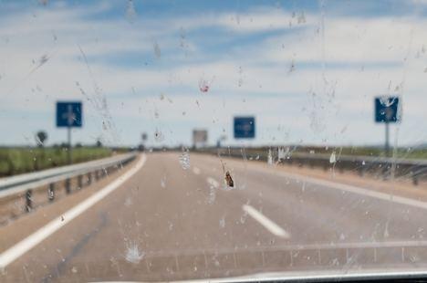 ¿Por qué se estrellan menos insectos en el parabrisas?