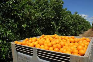 Comprar fruta online, garantía de máxima frescura