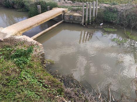 Desarrollan una solución con microorganismos vivos para acabar con el problema de la paja del arroz que contamina la Albufera