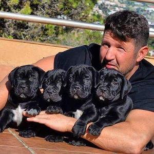 Los perros desokupas, ¿qué hay detrás de su cría y por qué se ha disparado su demanda?