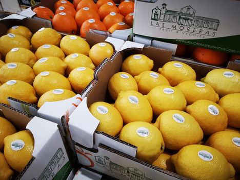 Las Moreras Fruit & Veggies, la nueva marca de TM Grupo Inmobiliario para desarrollar su negocio agrícola