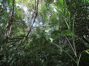 Los españoles cada vez más preocupados por la conservación de los bosques