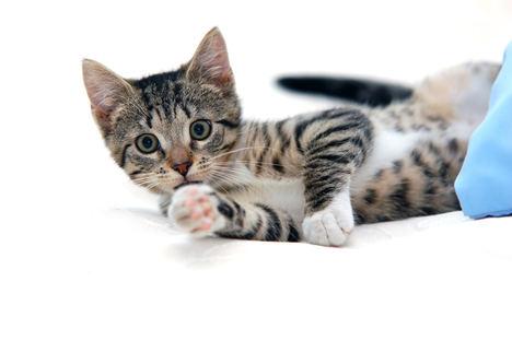 Día Internacional del Gato: cómo protegerlo frente a la artrosis