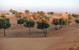 Nace Desert Leaves, la fundación para la gestión de la recuperación forestal en zonas áridas