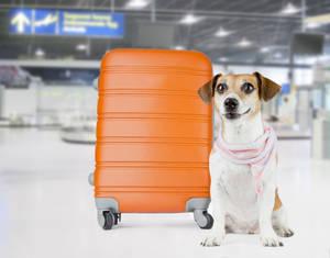 Etihad Airways te da las claves para viajar en avión con tu mascota este verano
