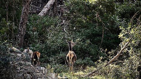 La Junta de Andalucía publica las bases reguladoras de las ayudas forestales que llevaban siete años sin convocarse