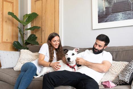 ¿Por qué es tan importante que los premios para perros sean saludables?