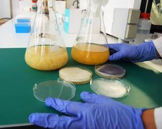 El CTCR consigue obtener quitosano de origen fúngico, a escala laboratorio, durante el primer año del proyecto QUITOTEC