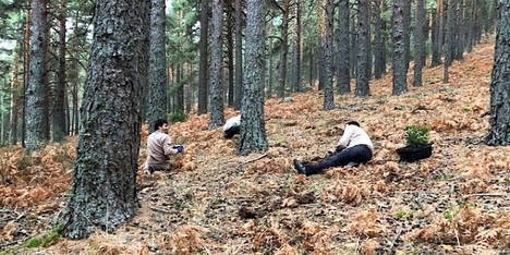 El compromiso con la firma electrónica reforesta el Alto Manzanares