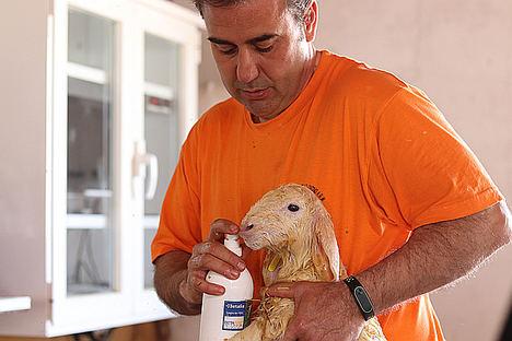 Granja AGM desarrolla un innovador producto lácteo con leche de ovejas alimentadas con chía