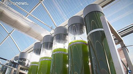 'Las microalgas son una fuente de Omega 3' afirma Euronews