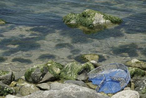 FPT Industrial hace otro concreto gesto para la sostenibilidad: tres toneladas de plástico de peces fuera de los mares de San Benedetto del Tronto