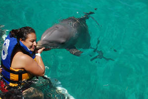 Nadar con delfines en México.