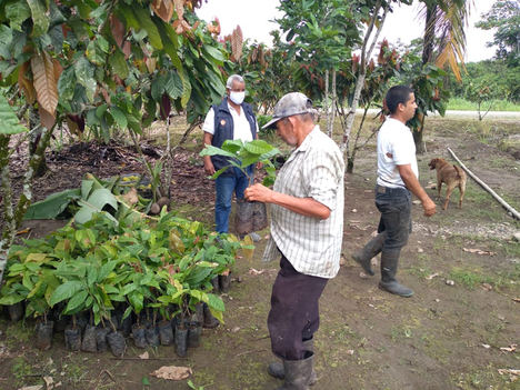 Fundación CODESPA potencia la economía agropecuaria en América del Sur