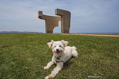 Las 10 ciudades más dog-friendly de España
