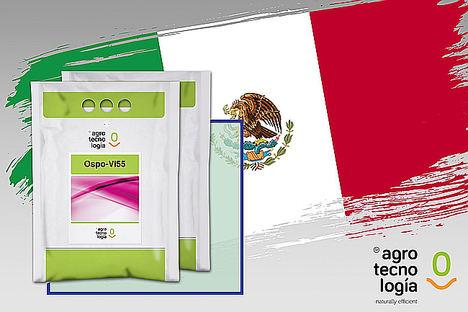 Grupo Agrotecnología obtiene su terer registro Biopesticida de COFEPRIS en México para OSPO-VI55