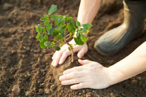 HP colabora con la asociación Áreas Verdes para ayudar a combatir el impacto de los incendios forestales en España