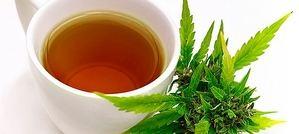 Infusión de marihuana medicinal.