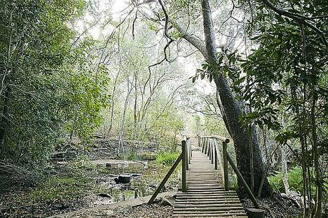 Jardín Botánico Nacional de Kirstenbosch.