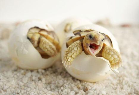 Juan Ferri en favor de la Conservación de Tortugas durante 2020