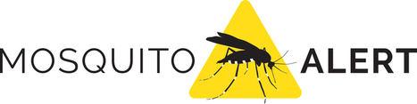 La inteligencia artificial ya identifica al mosquito tigre de las fotos recibidas en la app Mosquito Alert