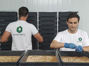Las granjas de insectos, un nuevo modelo de negocio en auge con perspectiva de futuro según Proteinsecta