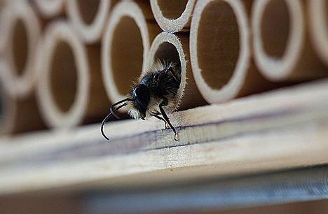 Limpiezapulido.es explica 'cómo combatir las plagas de insectos en verano'