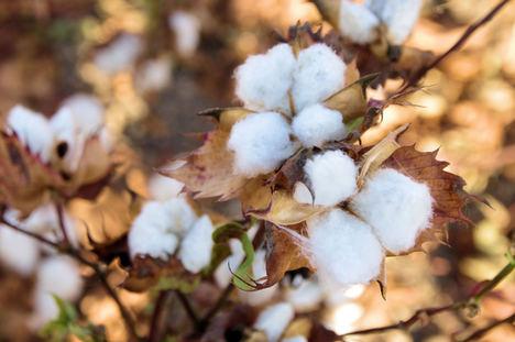 Adolfo Gallego CEO de Textilai: Los mayoristas textiles deben apostar por la calidad y la producción local