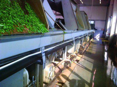 Los rodamientos Molded-Oil de NSK prolongan la vida útil en las cintas transportadoras de las plantas de productos alimenticios