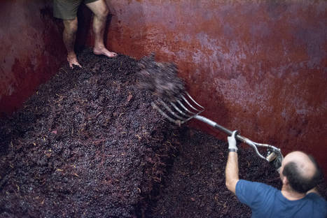 Vive la vendimia en territorio rioja con 'Magic Wine Tour'