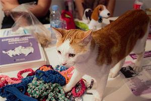 Mediterranean Cat Club presenta las razas más desconocidas de gatos en 100x100 MASCOTA