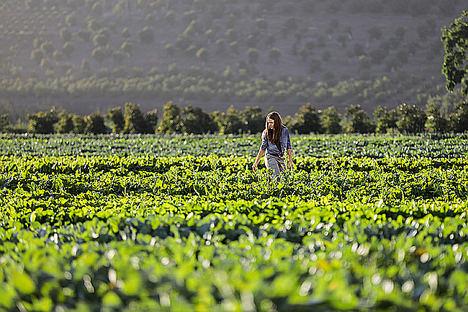 Ibercaja impulsa con Microsoft Azure el desarrollo de la agricultura inteligente para apoyar a los productores agrarios
