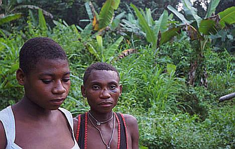Muchos bakas se ven forzados a vivir en los bordes de carreteras. Las tasas de alcoholismo y enfermedades como la malaria se han disparado y su dieta ha empeorado.