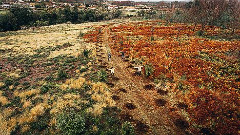 Más de 15.000 árboles para combatir la contaminación que en España provoca más de 93.000 muertes al año