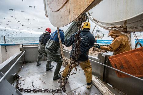 Pesqueria de Arenque del Mar del Norte.