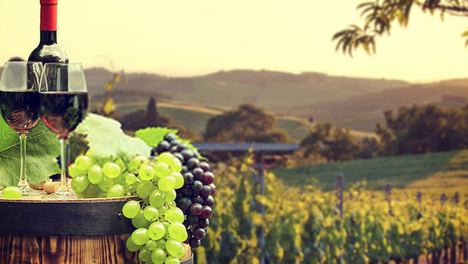 Pérdidas millonarias nublan el futuro del sector del vino
