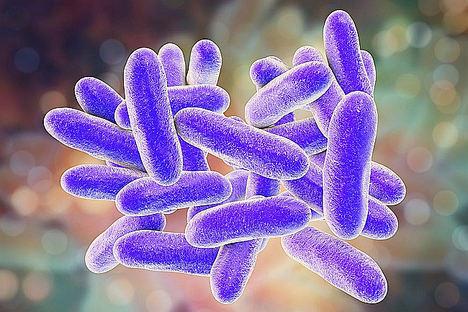 Rentokil aconseja cómo prevenir la Legionella en verano