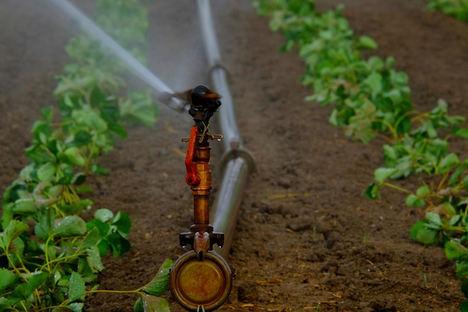 La tecnología ayuda a ahorrar al campo entre un 20% y un 30% de agua sobre el riego tradicional